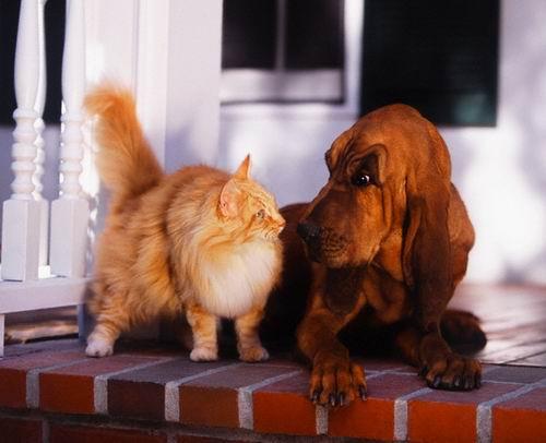 Чем отличаются кошки от собак.